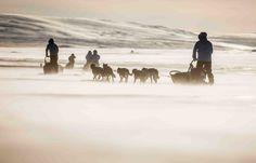 Fjällräven Polar Fjallraven - dog sledding adventure program