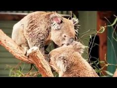 WILD LIFE Sydney Zoo, in the heart of Sydney and right next door to SEA LIFE Sydney Aquarium, is unlike any attraction you've ever seen - you'll be amazed at. Australia Trip, Darling Harbour, Cheap Tickets, Weekend Fun, Blue Ribbon, Wild Life, Brown Bear, Pet Birds, Trip Planning
