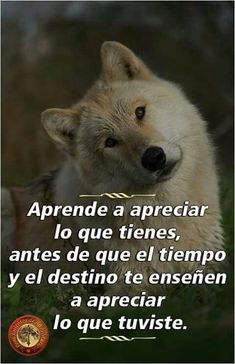 Imágenes de Lobos con Frases Tristes de Amor Images of Wolves with Sad Phrases of Love Spanish Inspirational Quotes, Spanish Quotes, Motivational Quotes, Gods Love Quotes, Strong Quotes, Positive Inspiration, Daily Inspiration Quotes, Joker Cosplay, Suicide Squad