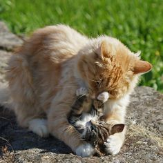 It always touches me to see a mother's love...