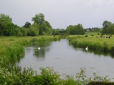 The River Avon in the Woodford Valley nr Salisbury