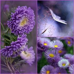 ~Katarina~College by Miss Katarina Purple Lilac, Shades Of Purple, Purple Flowers, Collages, Beautiful Collage, Beautiful Flowers, Nature Collage, Color Collage, Mood Colors