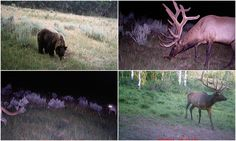 This guy's trail camera shots showcase some of Utah's diverse wildlife