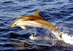 striped-dolphin-800x563