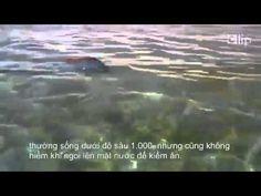 Kỳ lạ loài cá cực hiếm ở đại dương