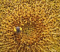 Pollen Harvest -----by Jenn Bate