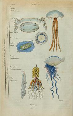 1 - 1833-40 - Dictionnaire pittoresque d'histoire naturelle et des phénomènes de la nature