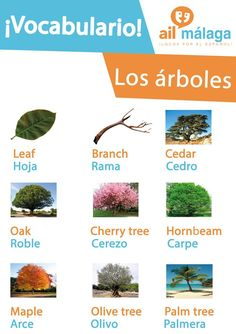 Some #trees in #Spanish :D #LearnSpanish #SpanishSchool #SpanishVocab