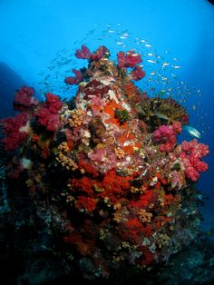 Corals and stuff at Richelieu Rock, Thailand's best dive site