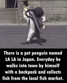 I Want A Penguin Now