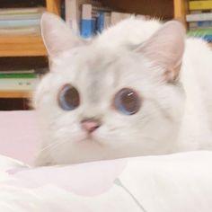 Cute Cat Memes, Funny Cute Cats, Cute Baby Cats, Baby Kittens, Cute Little Animals, Kittens Cutest, Cats And Kittens, Baby Animals, Funny Animals