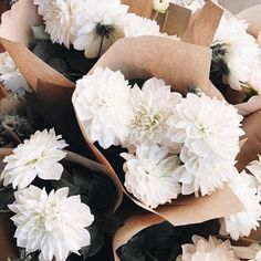 Starting our weekend with a pretty bunch of flowers 💕 Bunch Of Flowers, My Flower, Beautiful Flowers, Cactus Flower, Exotic Flowers, Bloom Where You Are Planted, Plants Are Friends, No Rain, Flower Aesthetic