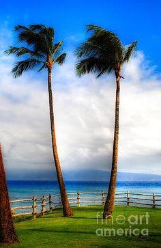 Kapalua Maui. by Kelly Wade