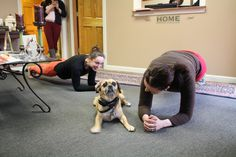 Max getting in on the plank competition. #plank #workouts #officelife #funny #puggle