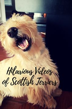 A blog for people who love Scottish Terriers written by a proud rescue dog mom. Helping Scottie Moms and Dads do what's best for their fur kids.