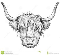Illustration about Realistic sketch of Scottish Cow, black and white drawing, vector illustration isolated on white. Illustration of background, bull, retro - 117507519 Highland Cow Painting, Highland Cow Art, Highland Cow Tattoo, Cow Sketch, Bull Painting, Cow Drawing, Scottish Highland Cow, Realistic Sketch, Bull Tattoos