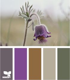 #color #palette (via design-seeds.com} tones