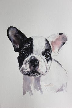 Henri, beautiful French bulldog at approx 6 months. Portrait in watercolour and ink . To see more and for commissions and enquiries please visit www.gingerhareartco.uk
