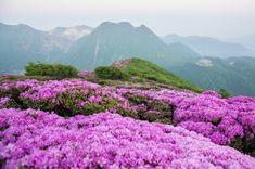 5月31日平治岳に朝駆けしました。今日登った山 「平治岳」会った人 「九重山行クラブ」のボッチさん、「赤毛日記」のなおさん 「九重逍遙」の大暇さん、...