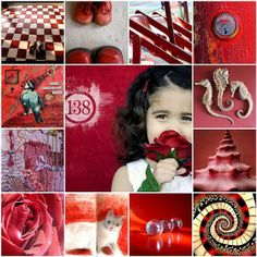 Pink and Red  All images are from my Flickr Friends by Catharinas-Love, via Flickr
