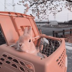 something special ♡ Cute Bunny, Cute Cats, Kawaii Bunny, Cute Little Animals, Cute Creatures, Animal Memes, Aesthetic Pictures, Animals And Pets, Cute Babies