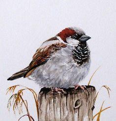 sparrow bird painting image9