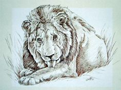 Secondhand lion reflection paper