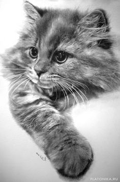 Рисунок пушистого кота карандашом