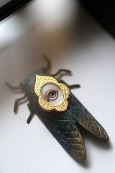 Cabinet of Curiosities Specimen no 28 - The Locust Eye, by mabgraves by Nina Maltese