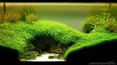 Favourites: Under the bridge by Microsash Take a look at the evolution of this tank here. Of special interest are the images of the hardscape!