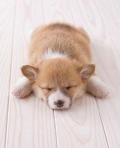 sweet snooze