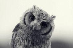 Thoughtful owl