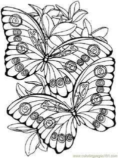 80 Best Free Colouring Pages Birds Butterflies Images In 2019
