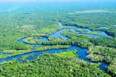 The Amazon rainforest is the biggest forest in the world and is also the last…