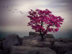 Tree of Love by Helena Georgiou on 500px