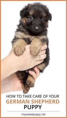 Not unlike bringing home a new baby, preparing for a puppy can be overwhelming. Here are our basics for German Shepherd puppy care so you can have a fabulous start with your fur baby.