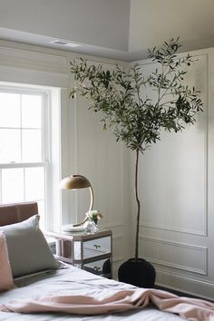 Potted plant in bedroom