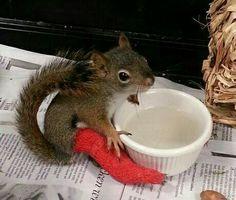 .little squirrel has a broken leg.