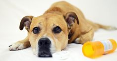March is National Animal Poison Prevention Month, and we'd like to kick it off by sharing our list of toxins most commonly ingested by pets—and reported to the ASPCA Animal Poison Control Center (APCC)—in See the full list here! National Animal, Dog Safety, Safety Tips, Pet Safe, Pet Health, Dog Care, Dog Training, Animals, Emergency Call