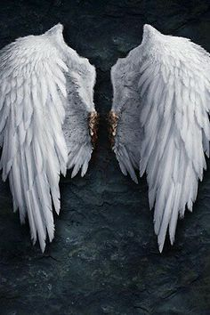 ❧ Angel Wings - Ailes d'Anges ❧                                                                                                                                                     More