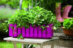 Emsa, jardinière Landhaus en rose vif