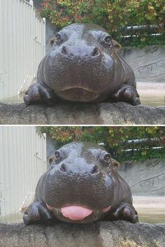 Animals Discover Have a bad day? Baby Hippo Do I have a bad day? Look at this hippopotamus Cute Little Animals Cute Funny Animals Funny Cute Cute Dogs Top Funny Adorable Baby Animals Funny Dogs Super Cute Animals Funny Happy Cute Little Animals, Cute Funny Animals, Funny Cute, Cute Dogs, Top Funny, Cutest Animals, Adorable Baby Animals, Funny Happy, Hilarious