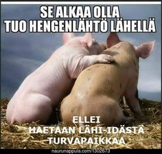 Turvapaikkaa hakemaan vaan, ettei käy köpelösti! - hauskat kuvat - Naurunappula Animals And Pets, Funny Animals, Cool Pictures, Funny Pictures, Twisted Humor, Funny Texts, Finland, I Laughed, Fairy Tales
