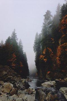 "idotravel:  ""forest  """