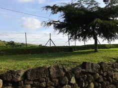#tree #bluesky #green