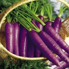 Purple Carrots ~~ Many people are unfamiliar to the purple carrot; its roots date back years ago in the area now known as Afghanistan. Although the purple carrot may be the precursor in the carrot world, it is still widely undervalued. Bright Purple, Purple Haze, Shades Of Purple, Green And Purple, Fruit And Veg, Fruits And Veggies, Purple Vegetables, Purple Food, All Things Purple
