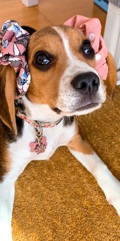 Adding any pooch to your family is definitely a reason for discussion. Generally speaking, Beagles do make incredible family pooches and they are extraordinary with huge gatherings of individuals.#beaglepuppies #cutebeagles #cutebeaglepuppies #funnybeagles #beaglepuppiescutest #dogsandpuppies #cutedogs Cute Beagles, Cute Puppies, Cute Dogs, Dogs And Puppies, Beagle Puppy, Boston Terrier, Positive Quotes, Pitbulls, Sketches
