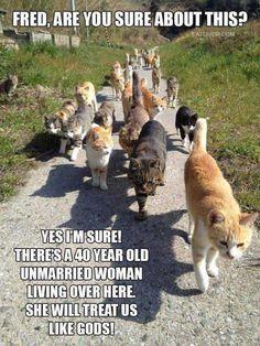 Funny Cat Memes Of The Day – 43 Pics – Lovely Animals Worl… Chat Drôle Memes Du Jour – 43 Photos – Monde des beaux animaux Funny Animal Memes, Animal Quotes, Funny Animal Pictures, Cute Funny Animals, Funny Cute, Cute Cats, Funny Humor, Animal Humour, Funny Pics