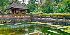 Ubud has emerged as a fascinating tourist destination for visitors to Bali, with a host of activities and places to see and experience. Ubud Palace, Global Entrepreneurship, Shady Tree, Traditional Market, Rice Terraces, Clear Blue Sky, Southeast Asia, Cool Things To Make, Places To See