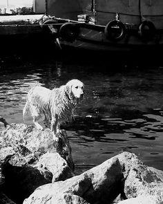 #dog #pies #zwierzęta #czarnobiale